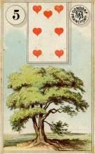 Lenormand Tree Card Meaning
