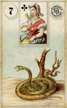Lenormand Snake Card Meaning