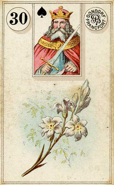 Lenormand - 30.Lily